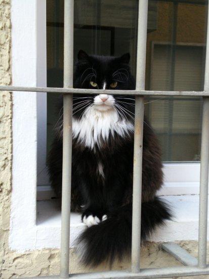 Free Cat's avatar 925ff8ed1c2f4258fdab8b9ff143b548