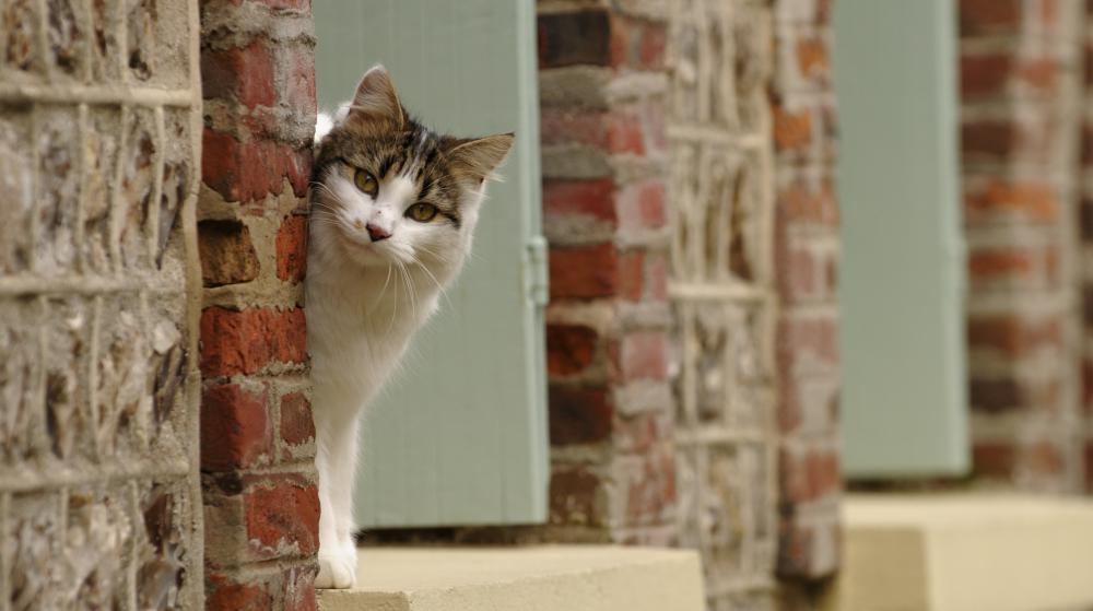 Des enfants accusés d'avoir torturé une chatte entendus dans le Gard 4429955