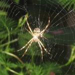Superstitions et présages sur l'araignée ! Araignee
