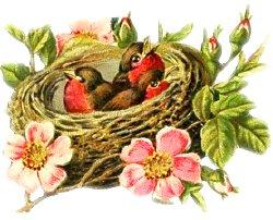 """THE ELECTION"" Bird-nest-1"