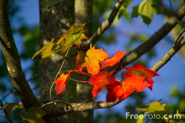 Jesen 19_35_17---Autumn-color-in-New-Hampshire_web