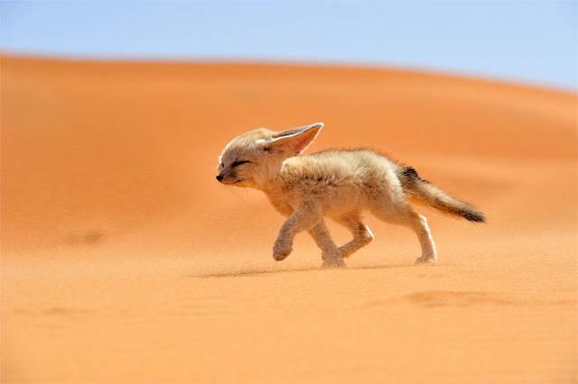 Les macs de la mignonnitude du règne animal - Page 2 Best-of-Nation-Geographic-2013-Traveler-Contest13-640x426