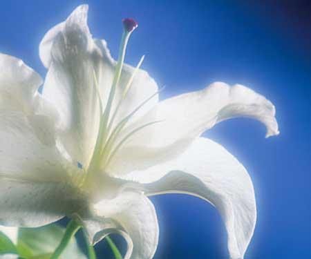 صور رومانسيه حب فى حب فى حب Funeral-flowers