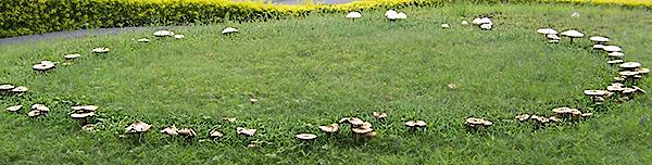 Le Meraviglie della Natura - Pagina 13 Cerchio