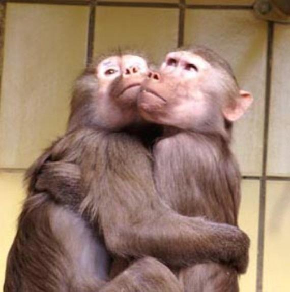 الحيوان والحب Animals-in-love-01