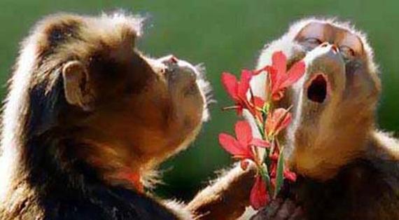 الحيوان والحب Animals-in-love-07