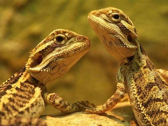 الحيوان والحب Animals-in-love-10