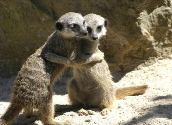 الحيوان والحب Animals-in-love-11