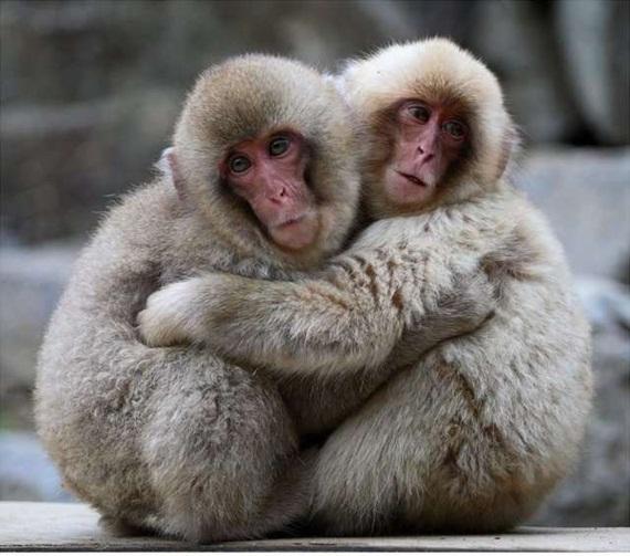 الحيوان والحب Animals-in-love-13