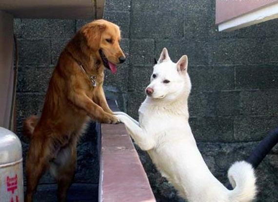 الحيوان والحب Animals-in-love-17