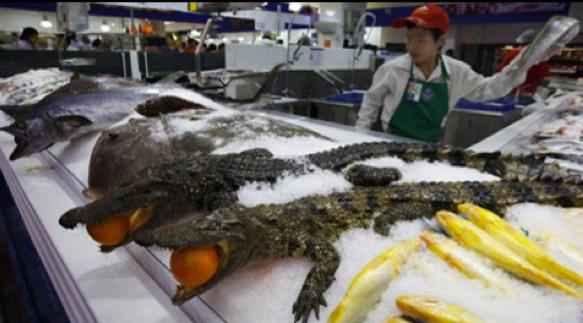 Pasar2 di China Yang bener2 Aneh Crocodiles-china-walmart