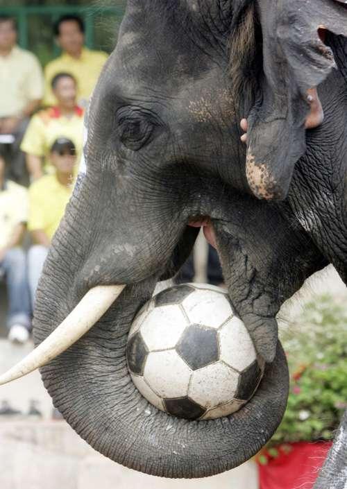 صـُُُُُُُُُُُُُُُُُُُُُُُُُُُُُُُُُُُُُُُُُـــــــ ـور حيوانات مضحكه Elephant