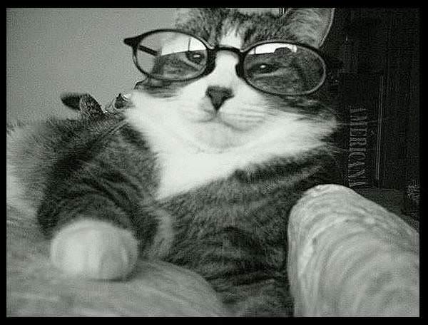 صـُُُُُُُُُُُُُُُُُُُُُُُُُُُُُُُُُُُُُُُُُـــــــ ـور حيوانات مضحكه Glasses