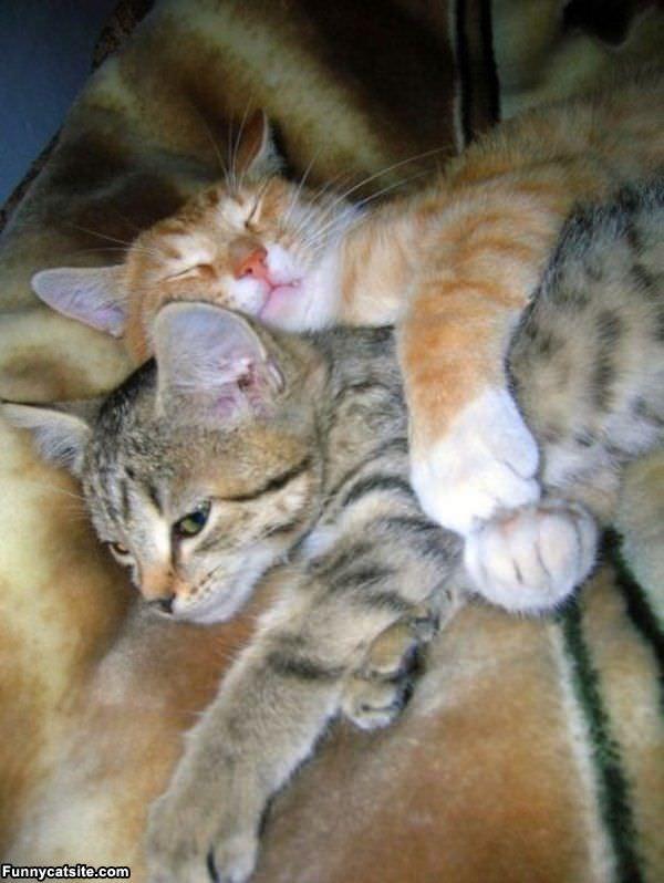Imagem do dia - Página 3 Hugging_It_Out
