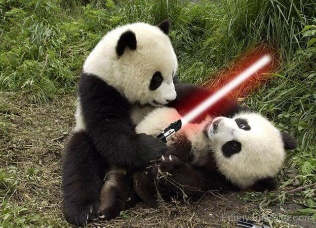 La guerre de la Loutre - Page 3 Star-War-In-Panda
