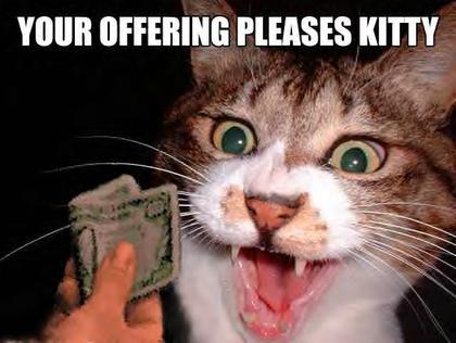 Fotografi për të qeshur... - Faqe 2 Funny_cat_pictures_094