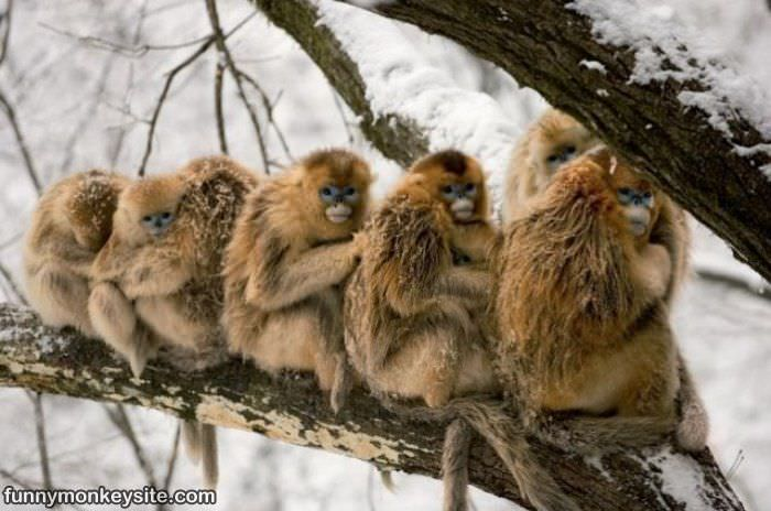 [Jeu] Association d'images - Page 4 Tree_Full_Of_Monkeys