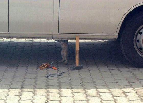 مجموعة صور مضحكـــة جدا Mechanic