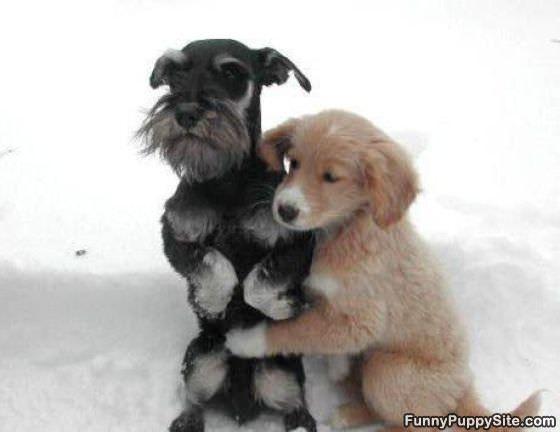 Dvoboj slika  - Page 12 Cute_dogs_hugging