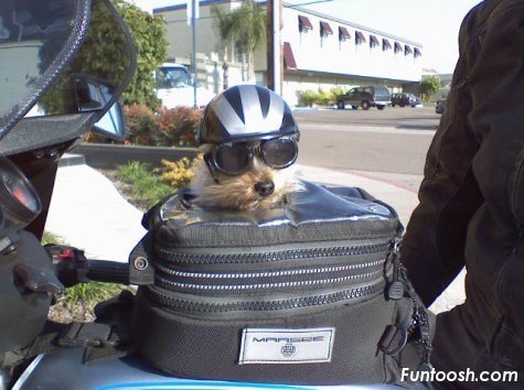 Прикольно All_packed_dog