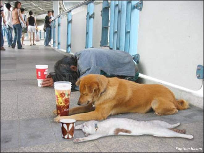 Прикольно Humans_animals_hit_recession
