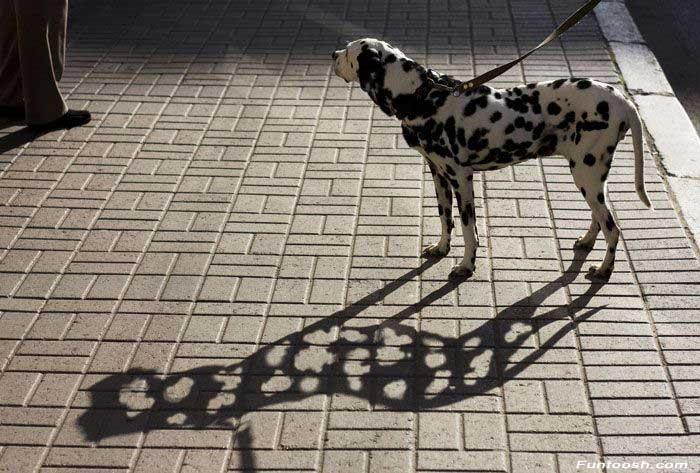 Прикольно Spot_thedog