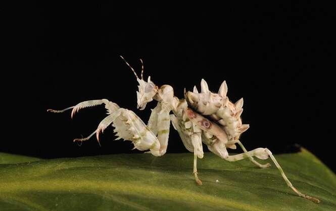 Le monde merveilleux des insectes - Page 2 9306