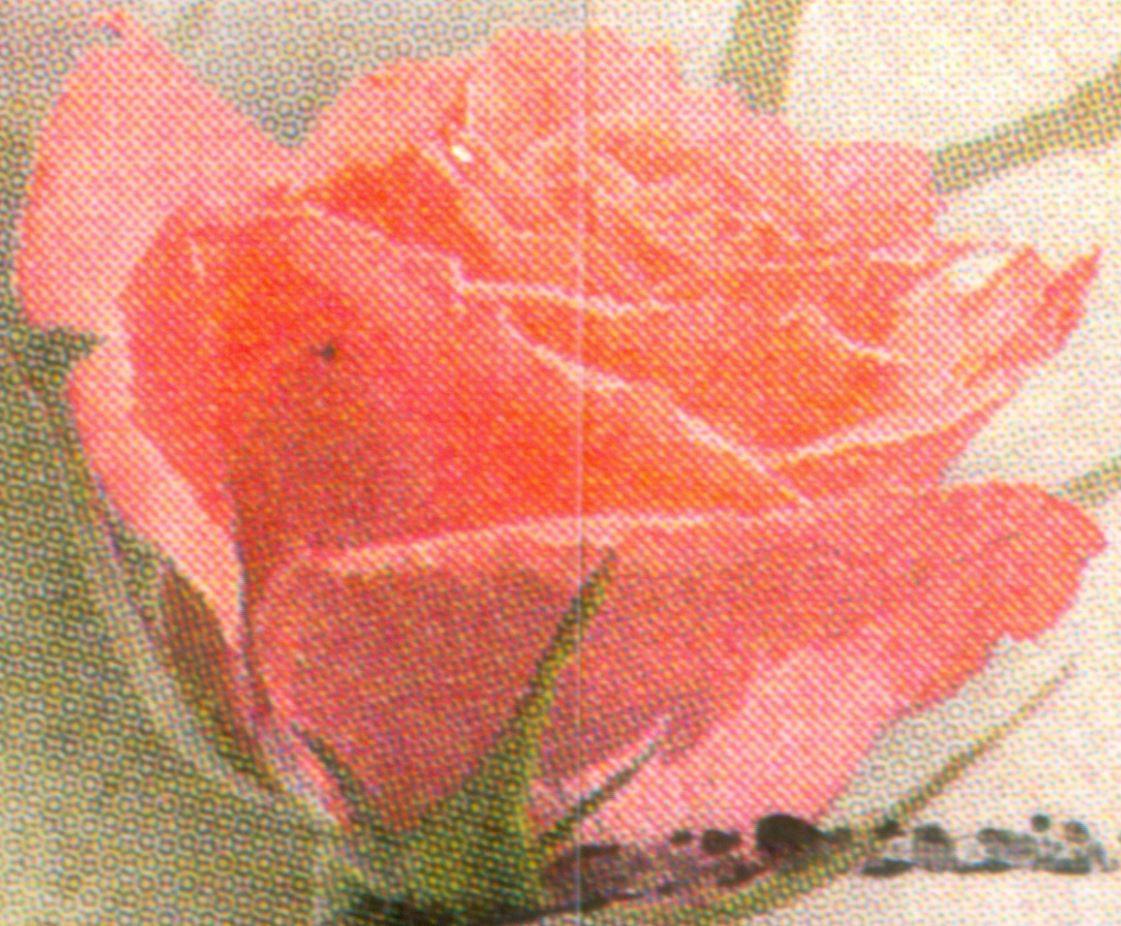 Bund 2003 Rosengruss - Rasterunterschiede! Und mehr! De_2003_rosen_gruss_M_rot_r90_01