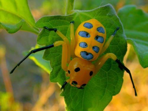 https://2img.net/h/www.galerie-insecte.org/galerie/image/dos15/big/araignee_laos.jpg