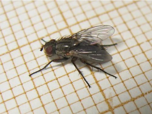 Une mouche comme une autre Img_2082.jpg