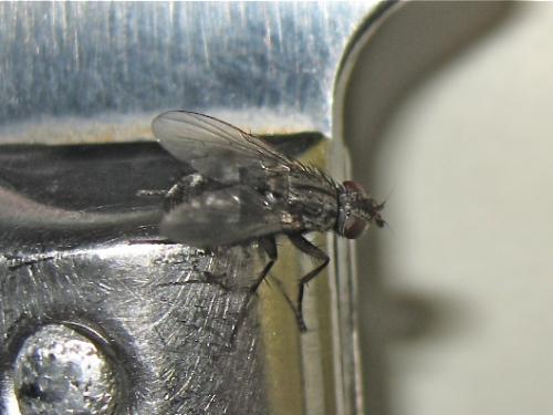 Une mouche comme une autre Img_2088.jpg