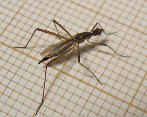 Slim fly Img_4723.jpg