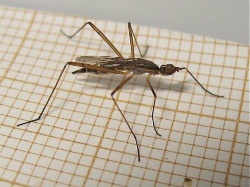 Slim fly Img_4725.jpg