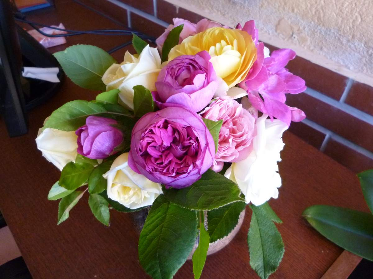 Rosa x centifolia 2014%2005%20%281%29
