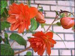 Цветы на балконе Balkon001
