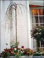 Цветы на балконе Balkon0021