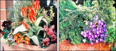 Цветы на балконе Balkon0031