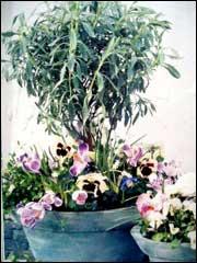 Цветы на балконе Balkon0032