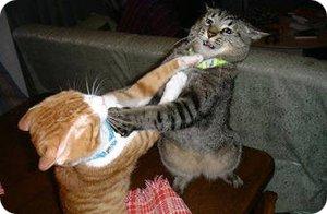 Dime lo que buscas y te dire lo que encuentro Hacer-que-mis-gatos-dejen-de-pelear1