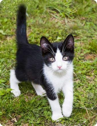 Explica qué significa tu nick y por qué lo elegiste - Página 2 Fotos-de-gatos-blanco-y-negro-gatos3