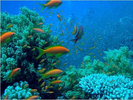 paradisi ...naturali, perchè in fondo siamo tutti ecologisti Barriera-corallina