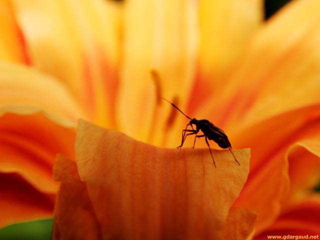 Narandzasta magija 20070624_123923_Orange