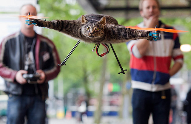 I don't surpport new work. Flying-cat