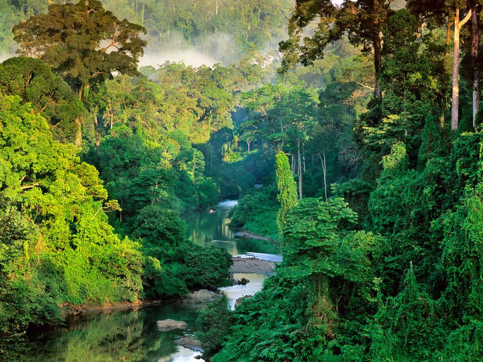 image de fond pour écran titre/game... Foret-tropicale-de-la-vallee-de-danum_940x705