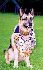 Литература о собаках, книги, рассказы, очерки.  - Страница 2 Dog