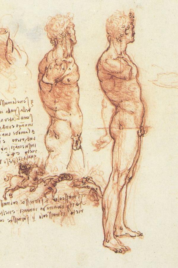 [Jeu] Association d'images - Page 19 Male_anatomy