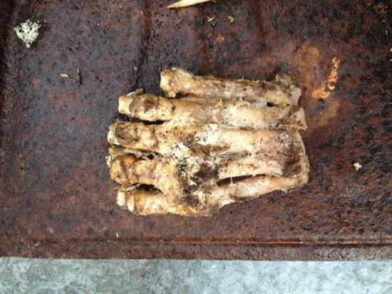 Un pied de bigfoot trouvé dans le Massachussetts ? Squatchpawfull-e1366320683609