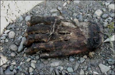 Un pied de bigfoot trouvé dans le Massachussetts ? Urs3