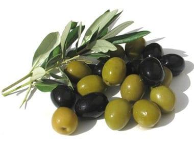 coltivazioni: ulivo Fotolia_olive