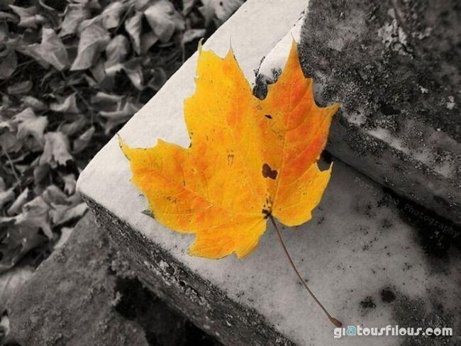 Όμορφες εικόνες... - Σελίδα 2 1272632139_bw_color_4